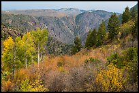 Shrubs and trees in fall color on canyon rim. Black Canyon of the Gunnison National Park ( color)