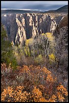Gambel Oak, aspen and canyon in autumn. Black Canyon of the Gunnison National Park ( color)