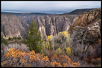Canyon view with gambel oak and aspen in fall foliage. Black Canyon of the Gunnison National Park ( color)