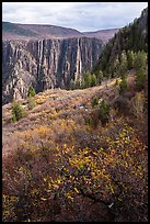 Gambel Oak and serviceberries color slopes above the canyon. Black Canyon of the Gunnison National Park ( color)
