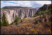 Fall foliage along Oak Flat Trail. Black Canyon of the Gunnison National Park ( color)