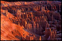 Silent City dense cluster of hoodoos from Bryce Point, sunrise. Bryce Canyon National Park ( color)