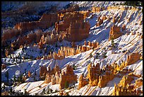Hoodoos and snow in Bryce Amphitheater, early morning. Bryce Canyon National Park ( color)