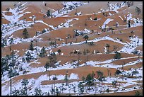 Ridges, snow, and trees. Bryce Canyon National Park ( color)