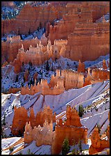 Hoodoos glowing in Bryce Amphitheater, early morning. Bryce Canyon National Park ( color)