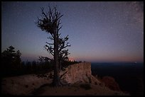 Bristlecone pine at edge of plateau at night. Bryce Canyon National Park, Utah, USA. (color)