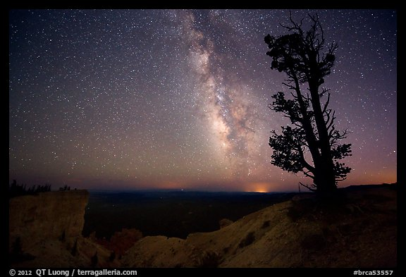 Bristlecone pine and Milky Way near Yovinpa Point. Bryce Canyon National Park (color)