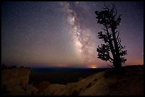 Bristlecone pine and Milky Way near Yovinpa Point. Bryce Canyon National Park ( color)