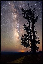 Bristlecone pine tree and Milky Way. Bryce Canyon National Park, Utah, USA. (color)