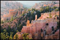 Creamsicle-colored hoodoos and conifers, Fairyland Point. Bryce Canyon National Park ( color)
