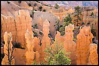 Hoodoos and walls of pinkish siltstone. Bryce Canyon National Park ( color)