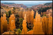 Hoodoos and Fairyland Canyon, early morning. Bryce Canyon National Park ( color)