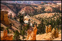 Hoodoos, eroded slopes with evergreens. Bryce Canyon National Park ( color)