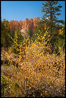 Shurbs in autumn foliage and hoodoos. Bryce Canyon National Park ( color)