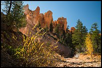 Dry creek with autumn foliage and hoodoos. Bryce Canyon National Park ( color)
