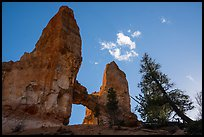 Pine trees, Tower Bridge, and cloud. Bryce Canyon National Park ( color)