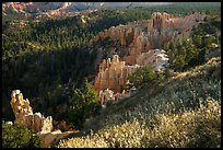 Grasses, conifers and hoodoos. Bryce Canyon National Park ( color)