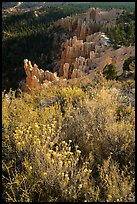 Wildflowers, conifers and hoodoos. Bryce Canyon National Park ( color)