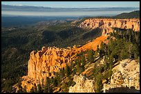 Pink cliffs and forest at sunrise from Rainbow Point. Bryce Canyon National Park ( color)