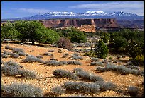 View with canyons and mountains, the Needles. Canyonlands National Park, Utah, USA. (color)