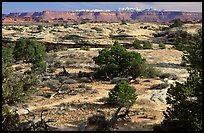 View with bare limestone table, canyons and mountains, the Needles. Canyonlands National Park, Utah, USA.