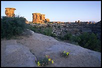 Wildflowers and towers, Big Spring Canyon overlook, sunrise, the Needles. Canyonlands National Park ( color)
