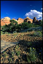 Wildflowers and sandstone towers near Elephant Hill, the Needles, late afternoon. Canyonlands National Park, Utah, USA.