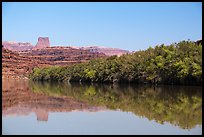 Trees on the shore of Colorado River. Canyonlands National Park, Utah, USA.
