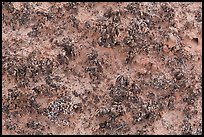 Close-up of knobby black crusts of cryptobiotic soil. Canyonlands National Park, Utah, USA. (color)