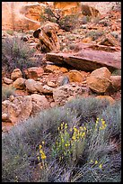Wildflowers and rocks, the Maze. Canyonlands National Park, Utah, USA. (color)