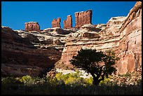 Trees below the Chocolate Drops, Maze District. Canyonlands National Park ( color)