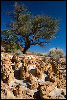 Concretions and tree, Orange Cliffs Unit, Glen Canyon National Recreation Area, Utah. USA ( color)