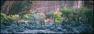 Sagebrush, trees and cliffs with desert varnish. Capitol Reef National Park (Panoramic color)