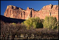 Historic orchard and cliffs. Capitol Reef National Park, Utah, USA.
