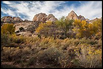 Srubs and trees in autum under white sandstone domes. Capitol Reef National Park ( color)