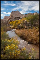 Fremont River, shrubs and trees in fall. Capitol Reef National Park ( color)