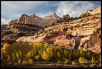 Sandstone domes tower above cottonwoods in Fremont River Gorge. Capitol Reef National Park, Utah, USA. (color)
