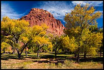 Fruita orchard and cliff in autumn. Capitol Reef National Park ( color)