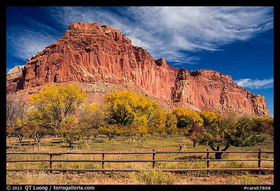 Historic orchard and cliff in autumn, Fruita. Capitol Reef National Park, Utah, USA.
