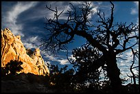 Silhouetted juniper and cliff. Capitol Reef National Park ( color)