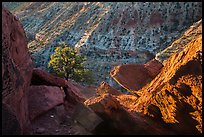 Juniper and cliffs on rim of Sulfur Creek Canyon. Capitol Reef National Park, Utah, USA. (color)
