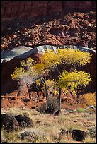 Basalt boulders, Cottonwoods in fall, cliff base. Capitol Reef National Park, Utah, USA. (color)