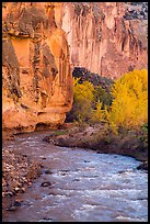 Bend of the Fremont River, cottonwoods, and cliffs in autumn. Capitol Reef National Park ( color)