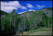 Trees and mountains, Baker Creek, morning spring. Great Basin National Park ( color)