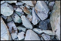 Ground close-up with quartzite blocks and bristlecone pine cones. Great Basin National Park, Nevada, USA. (color)