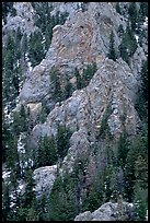 Limestone towers and pine trees near Lexington Arch. Great Basin National Park, Nevada, USA.