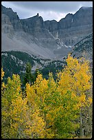 Aspens in fall color and Wheeler Peak. Great Basin National Park, Nevada, USA.