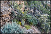 Pinyon pine and juniper zone vegetation zone. Grand Canyon National Park ( color)