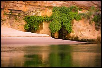 Beach, vegetation, and canyon walls, Marble Canyon. Grand Canyon National Park ( color)