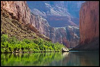 Colorado River and slope with vegetation in the spring, Marble Canyon. Grand Canyon National Park ( color)